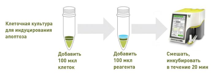 rabochij-process-muse.jpg
