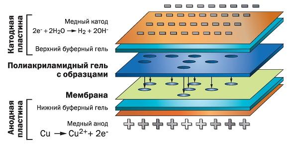 Схема работы системы iBlot®2